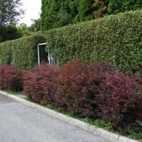 Двухъярусная живая изгородь из разных растений