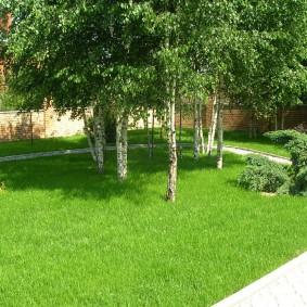 Озеленение дачного участка высокими деревьями