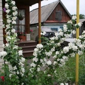 Белые цветки на ветках чубушника