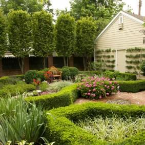 Зеленые бордюры из кустарников под стрижку