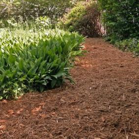 Древесная щепа на садовой дорожке