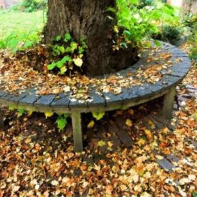 Деревянная лавочка вокруг старого дерева