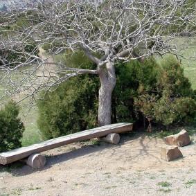 Лавочка из бревна под сухим деревом