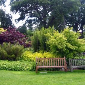 Деревянные скамейки около декоративных кустарников