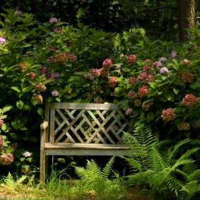 Старая скамейка в тени кустарников
