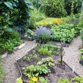 Огородные грядки с деревянными бортами