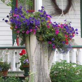 Клумба для петуний из старого дерева