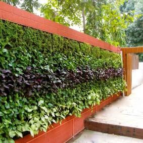 Вертикальная живая стенка из садовых растений