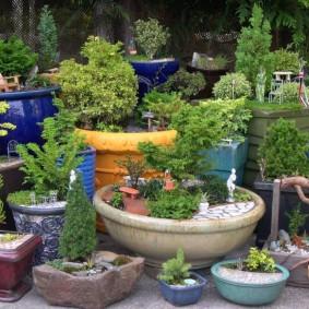 Мини-сад в пластиковых и керамических горшках