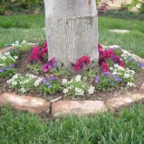 Декор цветами приствольного круга высокого дерева