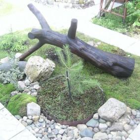 Старое дерево на садовой клумбе