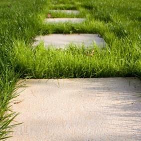 Высокая трава между бетонными плитами