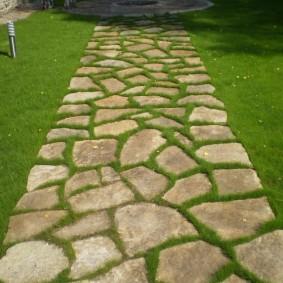 Газонная трава между камнями на дорожке