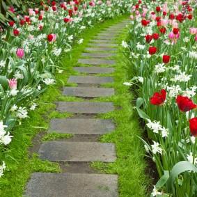 Красные тюльпаны вдоль дорожки на даче