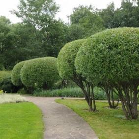 Декоративная стрижка ивовых кустов