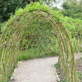 Ивовый туннель над садовой дорожкой