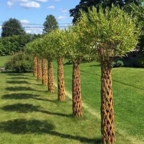 Декоративные пальмы из ивы плакучей