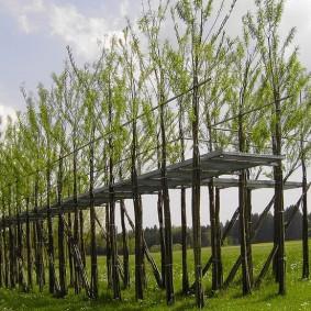 Деревянные мостки между ивовыми деревьями