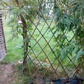 Плетенная калитка в живой изгороди