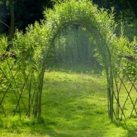 Садовая арка из живых растений
