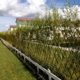 Вертикальное озеленение загородного участка