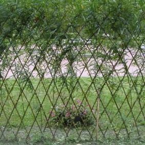 Ромбовидное плетение веток в живой стенке