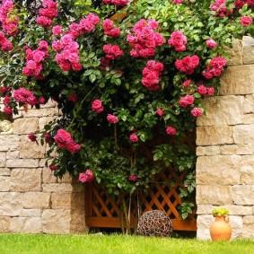 Цветущий кустарник возле забора из камня