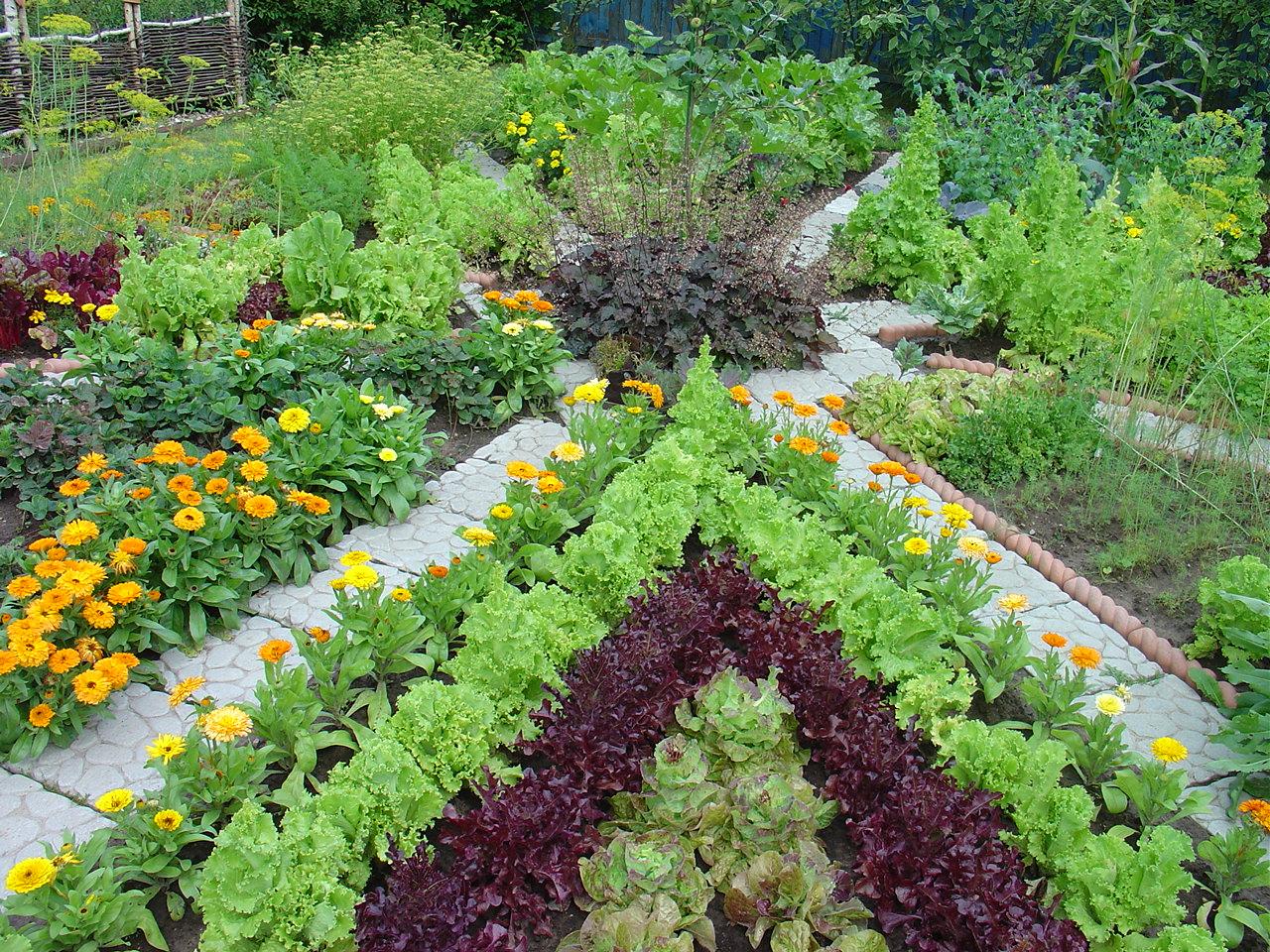 правило, цветник в саду и огороде фото богатство природы региона