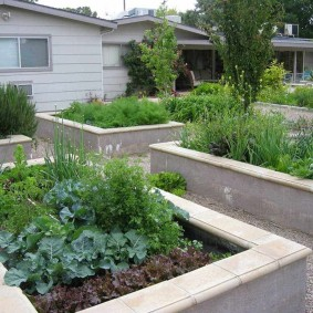 Бетонные грядки с овощными растениями