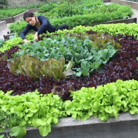 Уход за овощами на теплой грядке