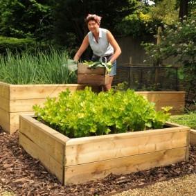 Уборка урожая на огороде с деревянными грядками