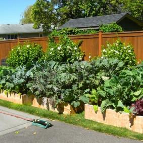 Выращивание овощей на грядках из дерева