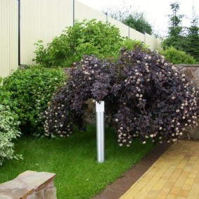 Декоративный кустарник с красивыми листьями
