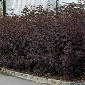 Плотная стенка из многолетних растений