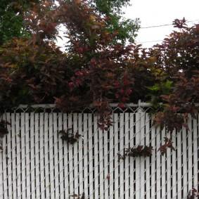 Белый забор из комбинации сетки-рабицы и ПВХ-панелей