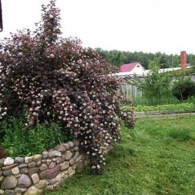 Дикий газон на садовом участке