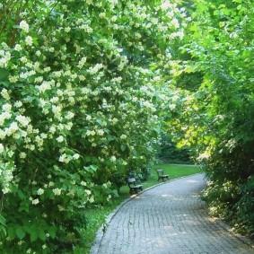 Садовая аллея с многолетними кустарниками