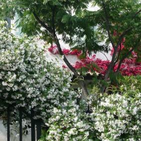 Южный сад с цветущим жасмином