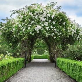 Садовая арка с цветущими лианами