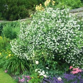 Садовый миксбордер из многолетних растений
