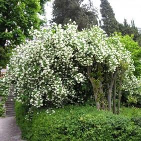 Укромный уголок сада с красивыми растениями