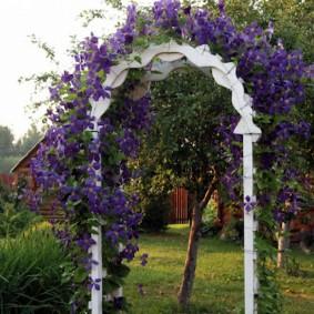Фиолетовые клематисы на белой арке