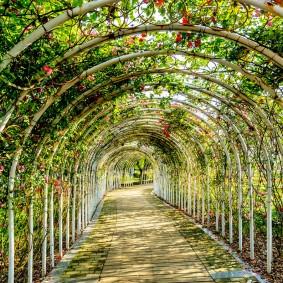 Садовая аллея с металлическими арками