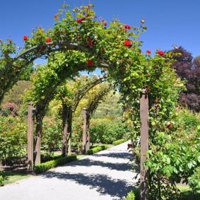 Плетистые розы на деревянных арках