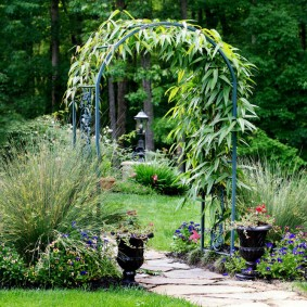 Садовая композиция с вьюном на арке