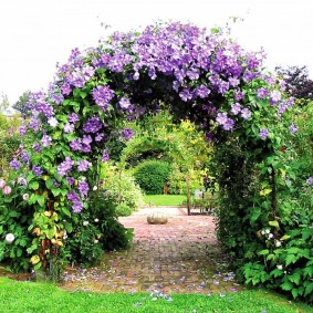 Сиреневые клематисы на садовой арке
