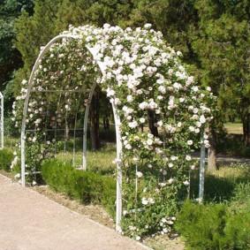 Полукруглая арка с белыми цветами