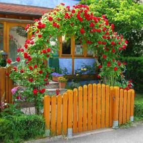 Красные розы над садовой калиткой