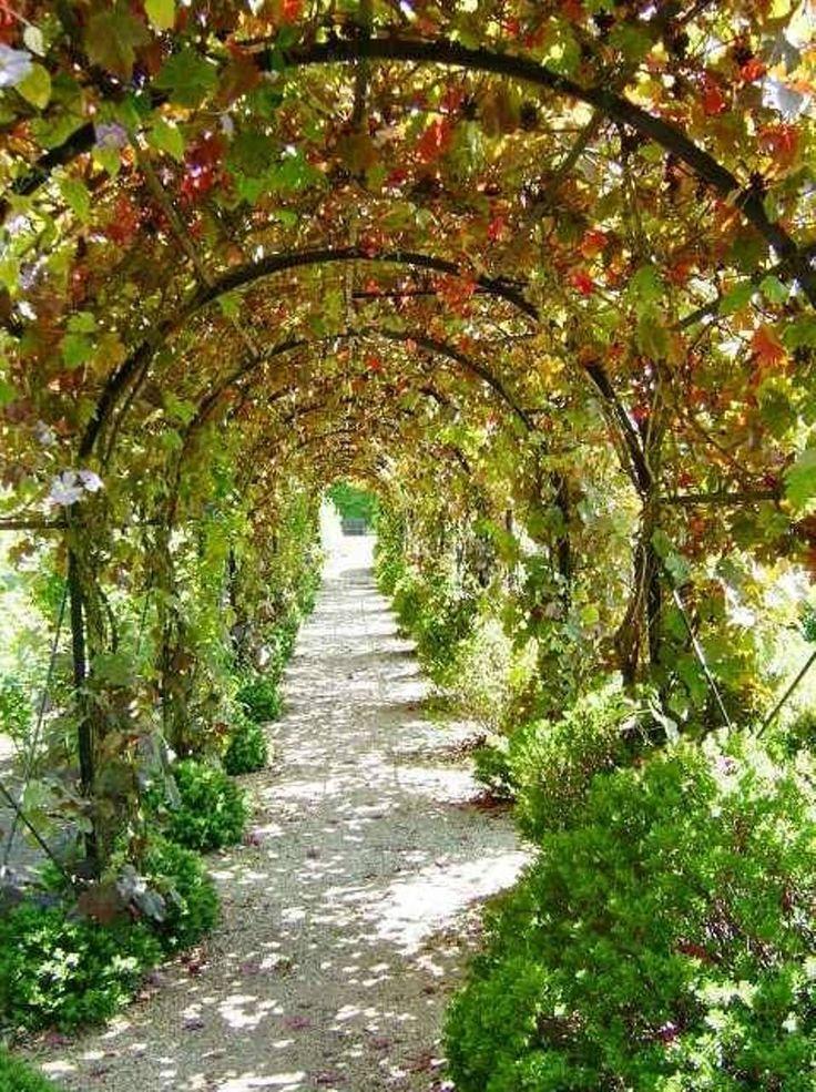 виноградные арки фотогалерея водолазка под горло