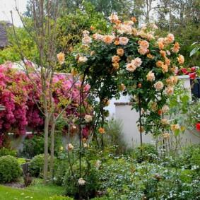 Кремовые цветки роз на садовой арке